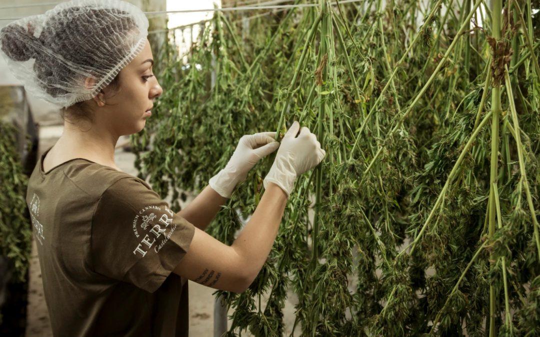 Michigan Marijuana Grower Insurance